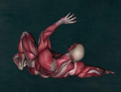 El secreto del músculo esquelético